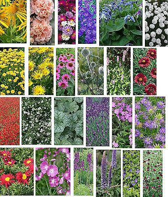 Pick & Mix Cottage Garden Flower Plug Plants Post only £2.90 for any Quantity
