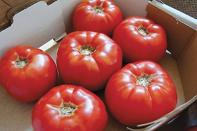 """Tomato """"Moskvich"""" Very Early Delicious Beefsteak Certified Organic Seeds"""