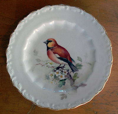 Royal Worcester Plate - Hawfinch - Songbird - Hand Painted c1912 Puce Mark