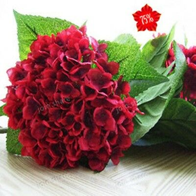 Garden bonsai flower seeds. 10 PCS Wine red hydrangea seeds. Beauty