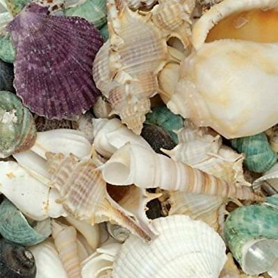 Creativity Bucket 500g Assorted Shells for Home Decor Crafts 8759-03 (87590)