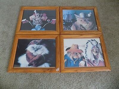 "4 Vintage Cats in Costume Photographs Framed 16"" x 13"""