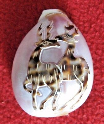 Carved Tiger Cowrie Shell