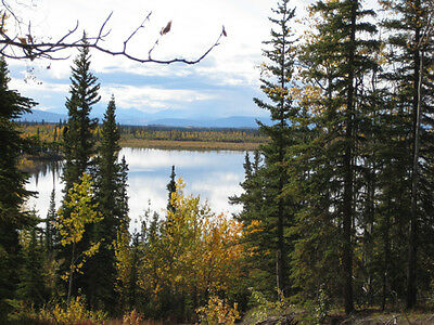 Explore The Wild Outdoors At DeadMan Lake! Live With The Wild! Financing Options