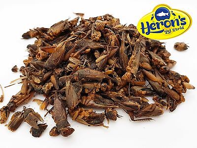 HERONS Natural Dried Crickets BEARDED DRAGON, GECKO, TURTLE, REPTILE FOOD