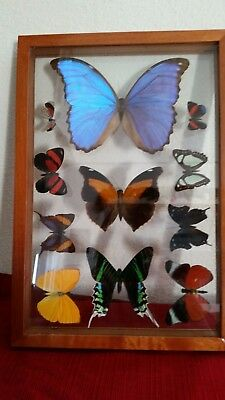 11  Real Framed Butterflies from Peru Jungle