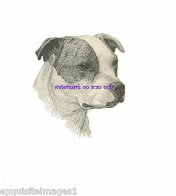 VINTAGE STAFFORDSHIRE PIT BULL TERRIER DOG~NEW Large Note Cards