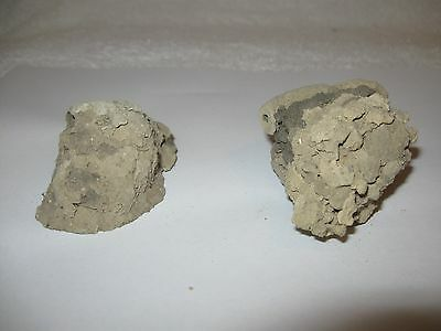 2 Texas Dirt Mud Dauber Nests ~ Biology Science Project, Taxidermy