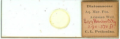 Diatoms from Egg Harbor City New Jersey Microscope Slide by C. L. Peticolas