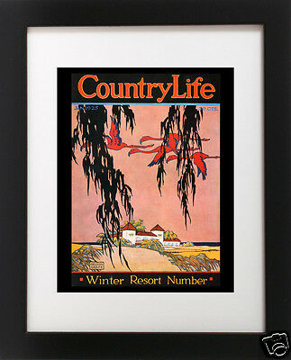 Antique FLORIDA Pink Flamingo Tree BEACH House Palm Tree Travel Poster Art Print