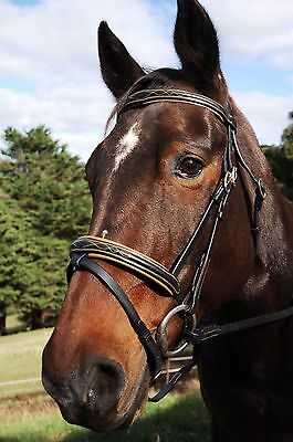 Black Leather Hanoverian Bridle Black Horse Riding Bridle Fancy Stitch Browband