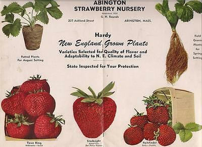 1949 Strawberry Nursery Plants Catalog Abington, Massachusetts color centerfold