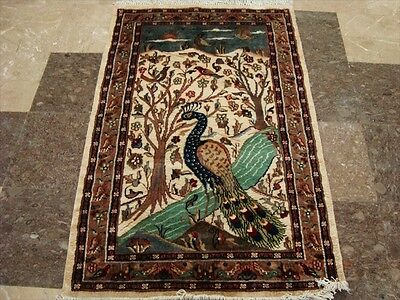 Amazing Peacock In Jungle Bird Fine Hand Knotted Rug Wool Silk Carpet Tapestry