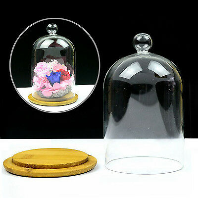 GOOD Glass Display Bell Jar Dome Flower Immortal Preservation With Wooden Base