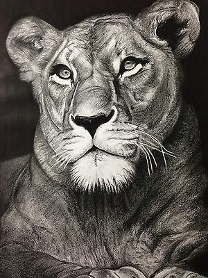 Lion Art, Pencil Drawing, Hand Drawn Original, Framed, A3 Size