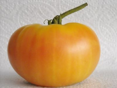 Brandywine Tomato - Sudduth's Strain - 5+ seeds - LARGE and LEGENDARY!