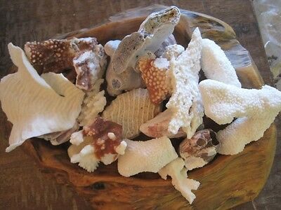 Natural Reef White Coral Pieces - Coral Specimen - Seashells - Coastal Decor