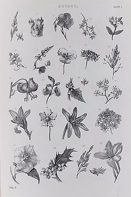 Botany, Botanical, Flowers - Antique B/W Print Lithograph - c19th Encyclopaedia
