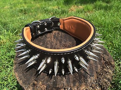 Bestia genuine leather spiked dog collar. 2.8 inch wide, large breeds. Bully Pit