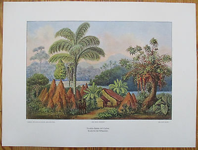 HAECKEL: Large Chromolithographic Print Boralu Sea Ceylon Sri Lanka - 1905