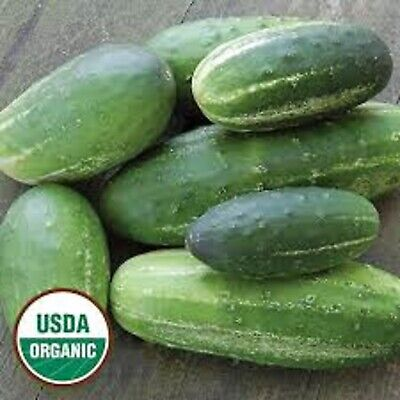 Cucumber Parade Certified Organic Russian Heirloom VERY EARLY 25+ SEEDS