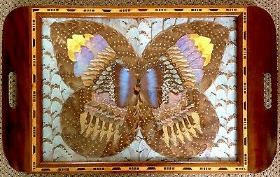 Antique Butterfly Wing Art Deco Tray Under Glass & Inlaid Wood Ex Condition!