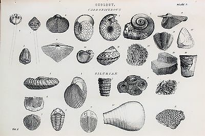 Geology, Fossils, Shells - Antique B/W Print Lithograph - c19th Encyclopaedia...