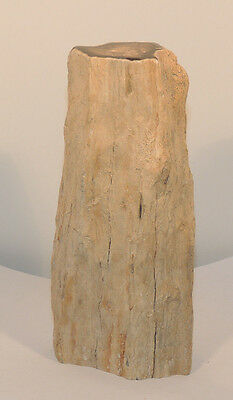 Petrified Wood Specimen from Wyoming over 6 inches (12250)