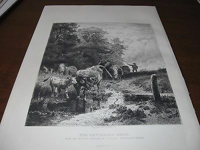 1885 ETCHING Art Print - MORAN of The RETURNING HERD of CATTLE Cows Calf w SNAKE