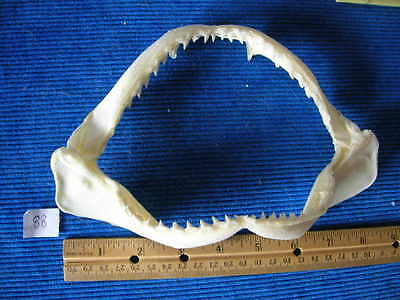 REAL  SHARK jaw sharks jaws teeth tooth skull skeleton fish mount taxidermy