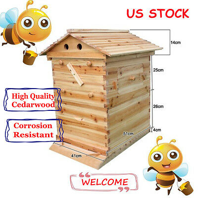 Wooden Bee Hive Brood Beekeeping House Box For Auto Flow Honey Beehive Frame