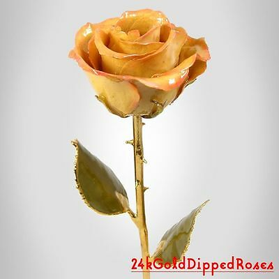 24k Gold Dipped Cream / Pink Real Rose Gold Stem (Free Anniversary Gift Box)