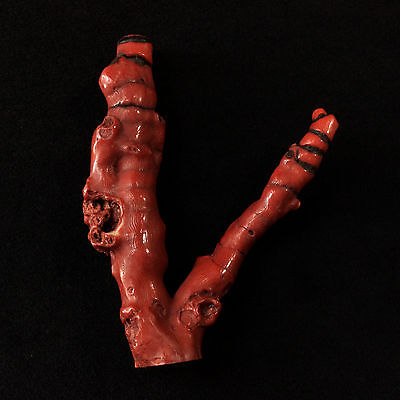 Dyed Red Fossil Coral Branches 170504 5in Stone of Emotional Balance