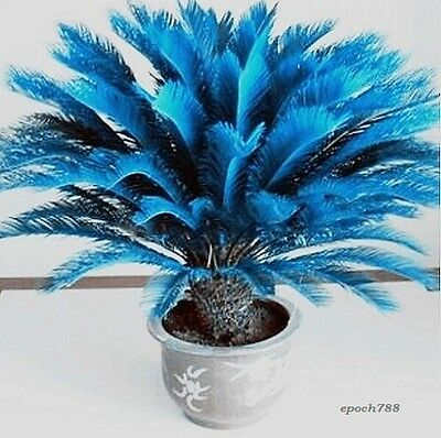 100 PCs/pack Blue palm tree Seeds Rare Bonsai Seeds potted Plant For Home Garden