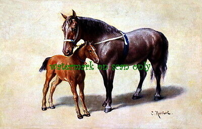c1900 Reichert~Black Horse & Brown Foal~Large Blank Note Cards