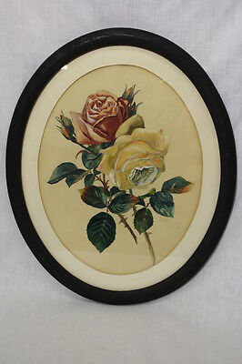 Signed 1912 Original Watercolor of Roses in an Oval Black Frame