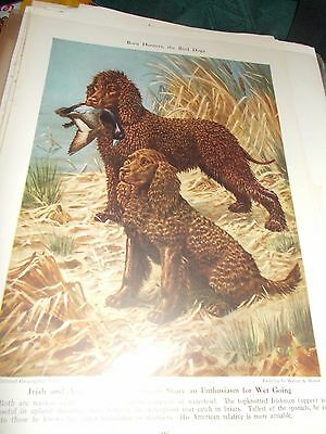 Walter A. Weber Irish & American Water Spaniels bookplate 1947 National Geo Mag