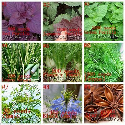 Multi-variety Herb Seeds Aromatic Spices Vegetable Medicinal Plants Organic NEW