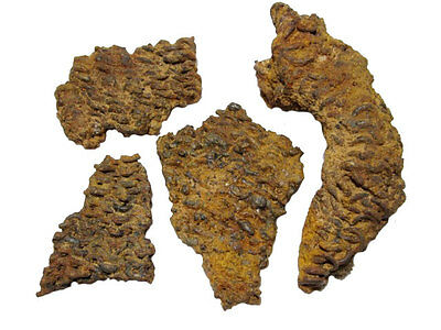 Extremely Rare Celtic Chainmail Fragments From A Celtic Warrior Accountrement++