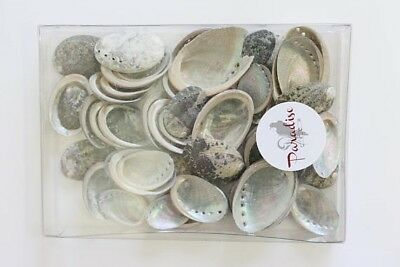 Bag of 20-50+ Mini Abalone shells - Rainbow Galaxy Shells- Natural Decor and Cra