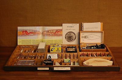 Vintage Science Entomology, Geology & Fossil Specimen Tray from the University O