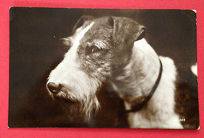Animals - Wire Haired Fox Terrier, RP Postcard PM 1934