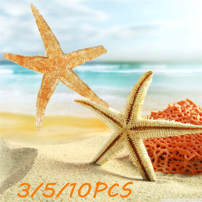 5/10Pcs 8cm-12cm Tan Flat Yellow Star Shell Starfish Wedding Party Craft Decor