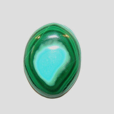 Malachite and Chrysocolla Cabochon 19.5x15mm with 4.5mm dome from Africa (12362)