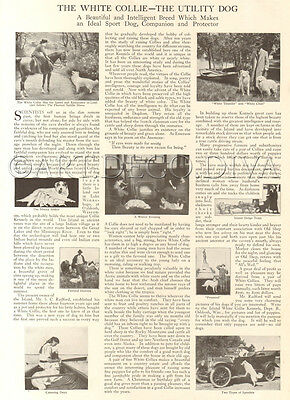 Antique 1915 Island WHITE COLLIE Kennel Historical Dog Photo Article Page