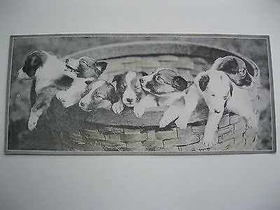 """VINTAGE 1920's SMALL  8"""" by 3 5/8"""" PUPPIES CALENDAR SAMPLE PRINT LITHO #79"""