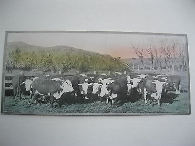 """VINTAGE 1920's SMALL  8"""" by 3 5/8"""" COWS CATTLE CALENDAR SAMPLE PRINT LITHO #76"""