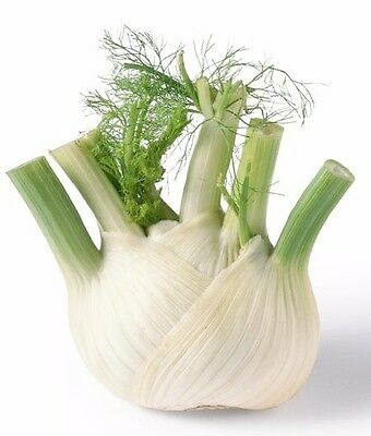 FENNEL Florence Seed 200x Seeds Herb