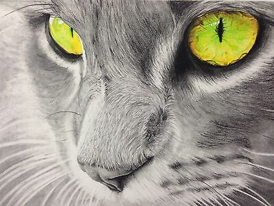 Cat, Kitten, Wildlife art , Pencil Drawing, Hand Drawn Original, Framed, Size A4