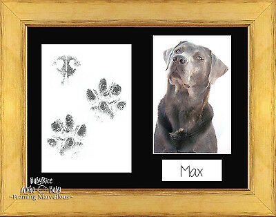 Pet Paw Prints Print Kit with Gold Frame and Mount Options Gift Dog Cat Keepsake